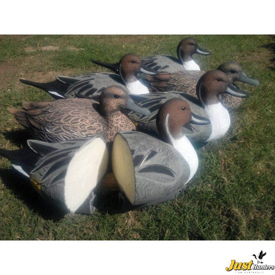 Pro Pintail Bullet Proof Decoys 6 Pc.